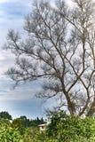 De takken van de boom met bladeren met bewolkt Royalty-vrije Stock Fotografie