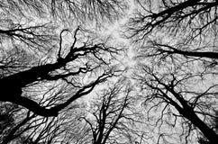 De takken van de boom met bladeren met bewolkt Stock Afbeelding