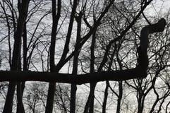 De takken van de boom met bladeren met bewolkt Stock Fotografie