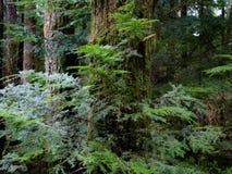 De takken van de boom met bladeren met bewolkt Stock Afbeeldingen