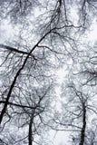De takken van de boom met bladeren met bewolkt Royalty-vrije Stock Foto's