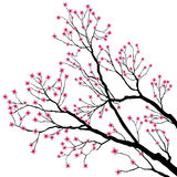 De Takken van de boom met Roze Bloemen vector illustratie