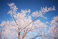 De takken van de boom in de winter Royalty-vrije Stock Foto's