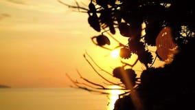 De takken van de close-upboom tegen de zonsondergang stock footage