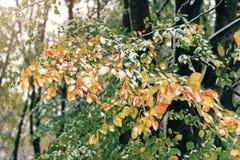 De takken van de dalingsboom onder de sneeuw Royalty-vrije Stock Foto's
