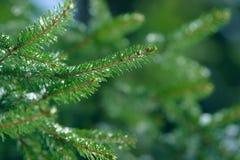 De takken van de de winterspar met ijs, sneeuw en bevroren waterdalingen die worden behandeld Bevroren nette boomtak in de winter Stock Afbeeldingen
