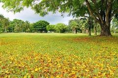De takken van de grote boom met droge bladeren Stock Foto's