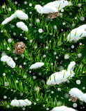 De takken van de kerstboom met pinecones en sneeuw Royalty-vrije Stock Foto