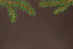 De takken van de Kerstmisspar op een donkere bruine achtergrond Stock Foto's