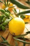De takken van de olijf met citroen Stock Afbeeldingen