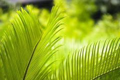 De takken van de palm Stock Foto's