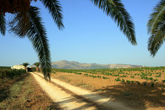 De takken van de palm over landweg stock fotografie