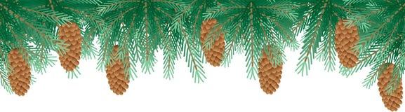 De takken van de pijnboom Stock Foto