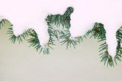 De takken van de pijnboom in de sneeuw Stock Foto's