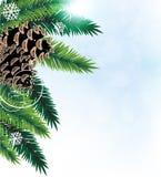 De takken van de pijnboom met kegels Stock Afbeeldingen