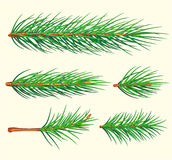 De Takken van de pijnboom. Vector borstel Royalty-vrije Stock Fotografie