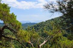 De takken van de pijnboomboom en de bergen van de Kaukasus met bos worden behandeld dat Royalty-vrije Stock Foto