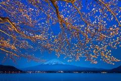 De takken van de Sakurabloem met fujiberg stock foto