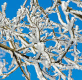 De takken van de sneeuw Stock Foto's