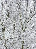 De takken van de sneeuw royalty-vrije stock foto's