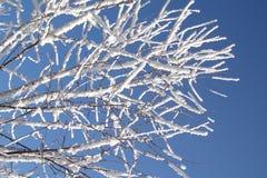 De takken van de winter Stock Afbeeldingen