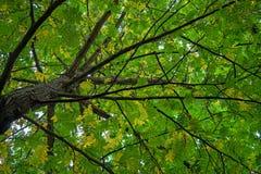 De takken van de de herfstboom hierboven met groene, gele en oranje kleuren stock fotografie