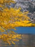 De takken van de de herfstboom tegen de achtergrond van het bergmeer royalty-vrije stock fotografie