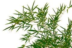 De takken van het bamboe Royalty-vrije Stock Afbeelding