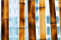 De takken van het bamboe die op het wit worden geïsoleerd? Stock Foto