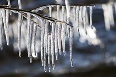 De takken van het ijs Stock Foto's