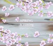 De takken van de kersenbloem op houten achtergrond De lente Vectorkaarten vector illustratie