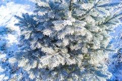 De takken van de Kerstboom zijn behandeld met rijp op een blauwe achtergrond royalty-vrije stock fotografie