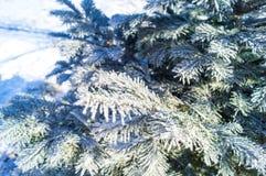 De takken van de Kerstboom zijn behandeld met rijp op een blauwe achtergrond royalty-vrije stock foto