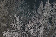 De takken van de macro van de boom zijn behandeld met rijp Royalty-vrije Stock Afbeeldingen