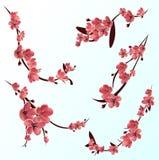 De takken van namen het tot bloei komen sakura toe Japanse kersenboom Vector Geïsoleerde pictogramreeks royalty-vrije illustratie