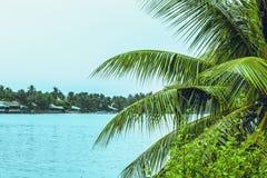 De takken van de palm en het overzees royalty-vrije stock foto's
