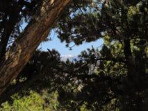 De Takken van de pijnboomboom met Sneeuw Bedekte Bergketen op Achtergrond stock afbeeldingen