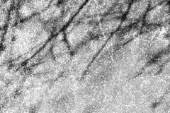 De takken van de schaduwboom op een concrete muur stock afbeeldingen