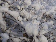 De takken van struiken in de sneeuw Royalty-vrije Stock Foto