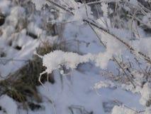De takken van struiken in de sneeuw Stock Foto's