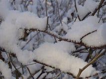 De takken van struiken in de sneeuw Royalty-vrije Stock Afbeeldingen