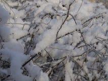 De takken van struiken in de sneeuw Stock Fotografie