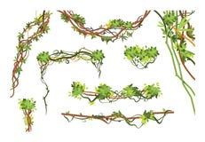 De takken van de wilderniswijnstok Beeldverhaal die de installaties van Liana hangen Wildernis die groene installatie vectorinzam stock illustratie