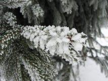 De takken van de de winterspar in sneeuw en vorst stock afbeelding