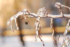 De takken zijn ijs-behandeld. Royalty-vrije Stock Afbeeldingen