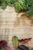De takkenachtergrond van het hout en van de spar Stock Afbeeldingen