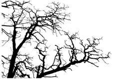 De takkensilhouet van de boom Stock Afbeeldingen