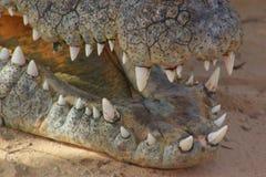 De tanden van de krokodil Stock Foto's