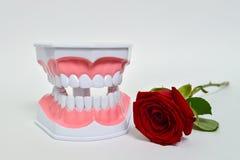De tandkaak en nam bloem, de vieringsbeeld van de tandartsdag toe Royalty-vrije Stock Foto