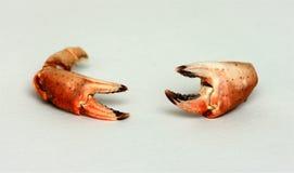 De tangen van de krab Stock Afbeelding